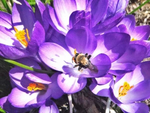 Springtime in the  Adirondacks
